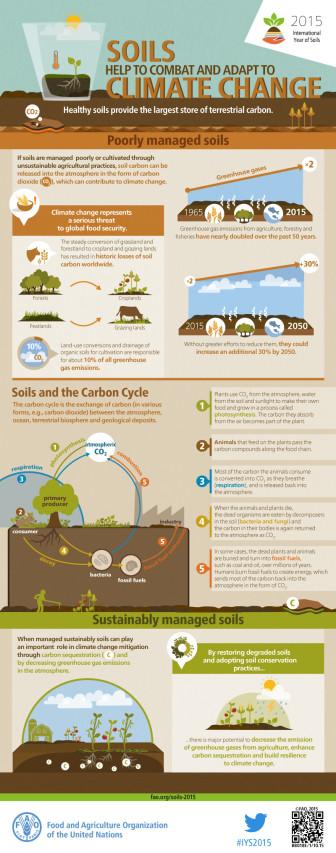 FAO-Infographic-IYS2015-fs5-en