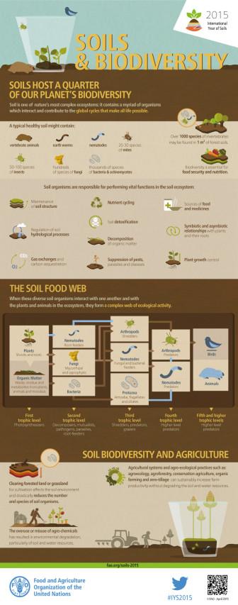 FAO-Infographic-IYS2015-fs3-en-336x853