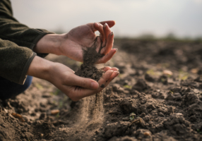 Female hands pouring a black soil in the field. Female agronomist testing a quality of soil. Concept of agriculture.